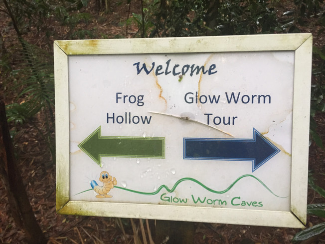 Glow–Worms Cave. Jaskinia Świecących Robaczków