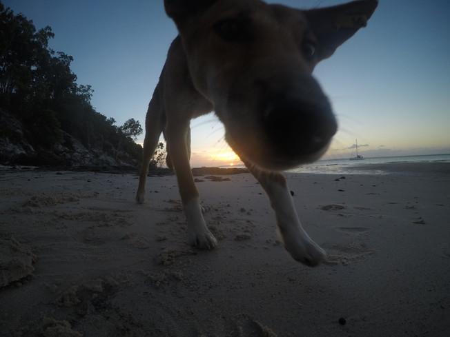 Fraser Island. Wyspa Fraser