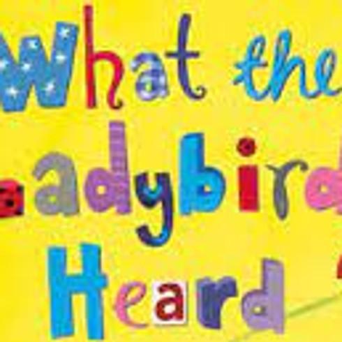 What The Ladybird Heard - LIVE