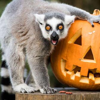Local Halloween Fun for Kids