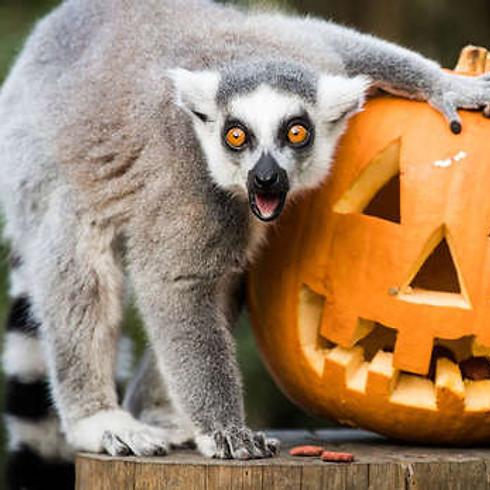 Family Halloween Fun at London Zoo