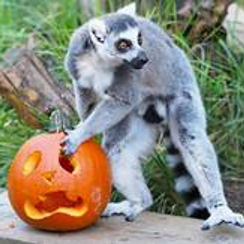 Halloween at ZSL London Zoo