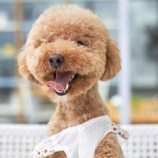 outdoor-dog-small-mammal-variety-smile-5