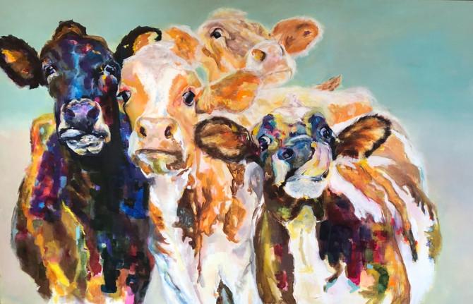 Cow quartett