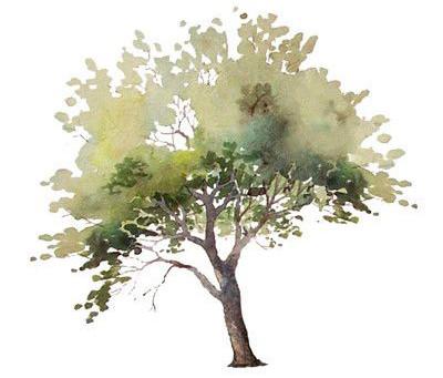 เด็กสถาปัตย์ต้องดู! รวมภาพวาดต้นไม้ landscaping trees งามๆให้ฝึกวาดตาม