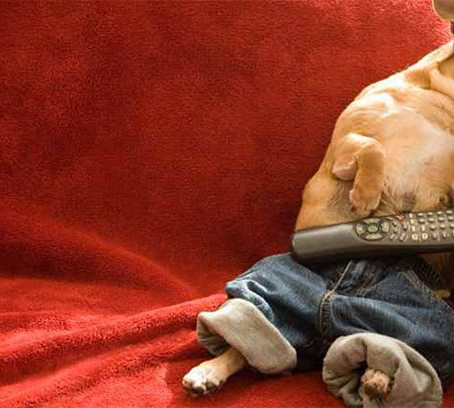 3 Ways To Get Your Dog To Sleep In On Weekends