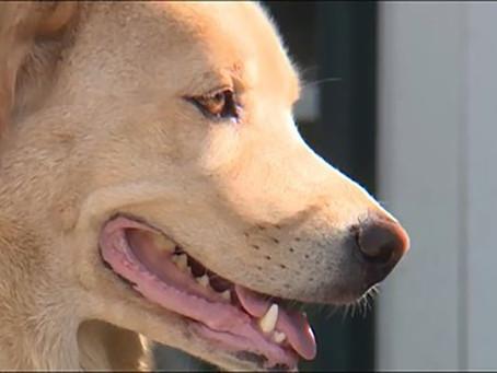 Kansas dog makes 50-mile trek to her old home in Missouri