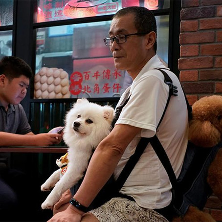 """China just upgraded the status of dogs from """"livestock"""" to """"pets"""""""