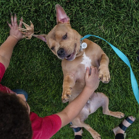 Make your rescue or foster pet a 'forever' friend