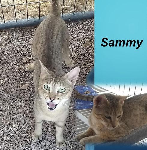 Sammy_edited.jpg