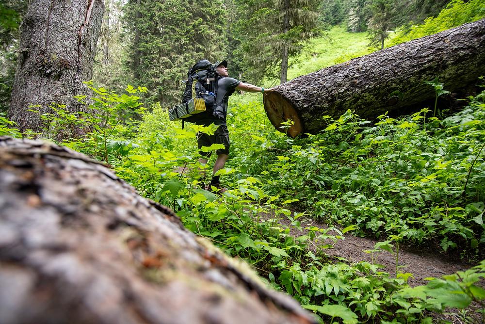 Church mountain trail blowdown