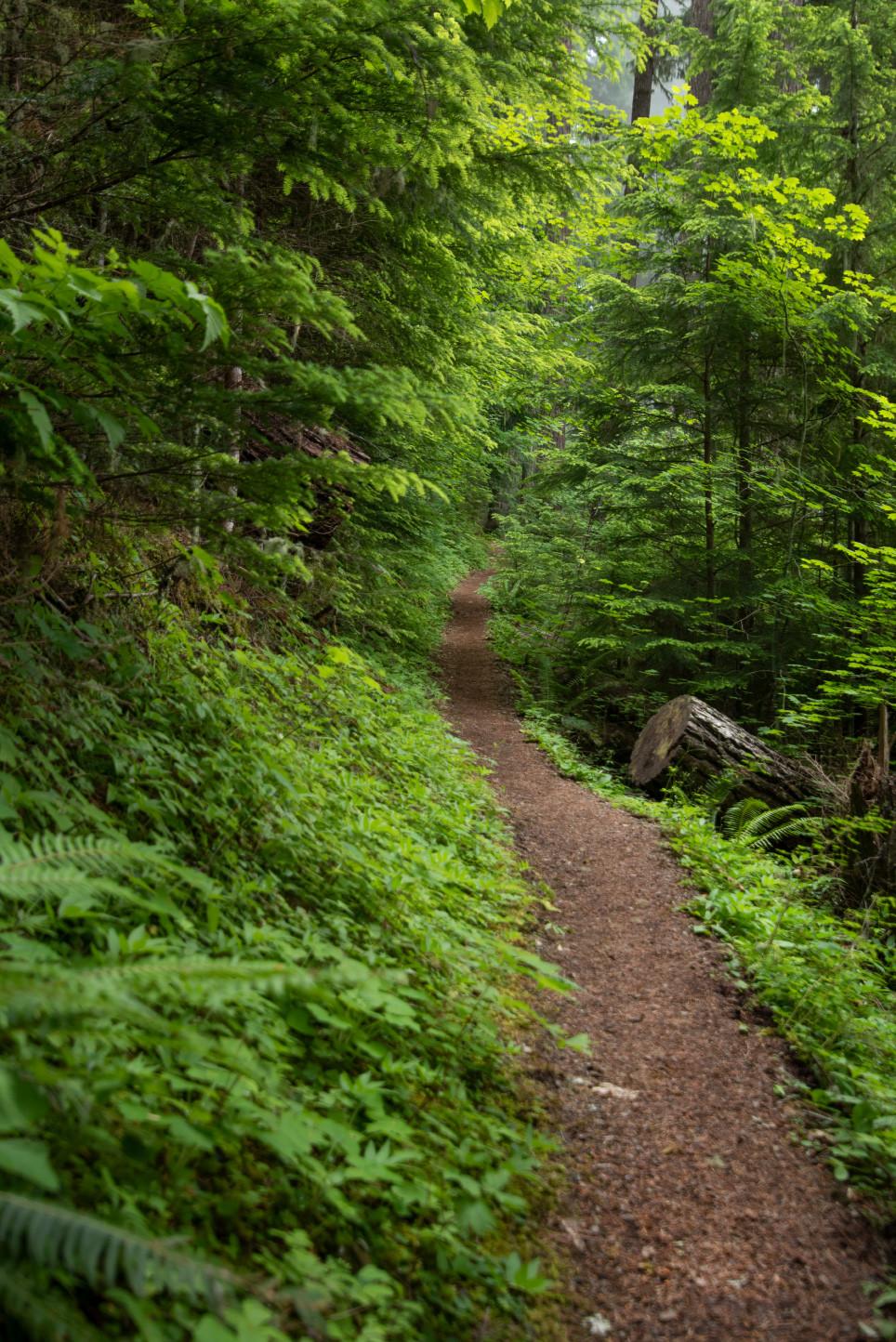 Church Mountain Trail North Cascades