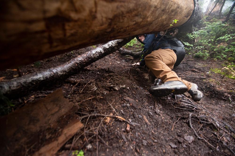 Hiker climbing underneath a log