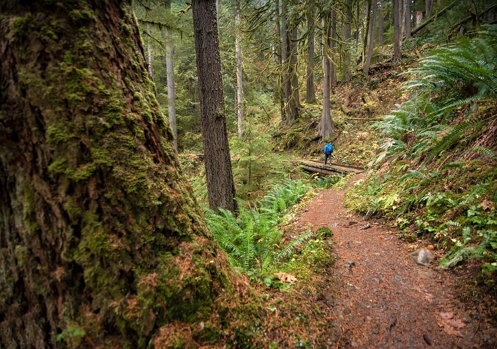 Baker Lake Trail footbridge