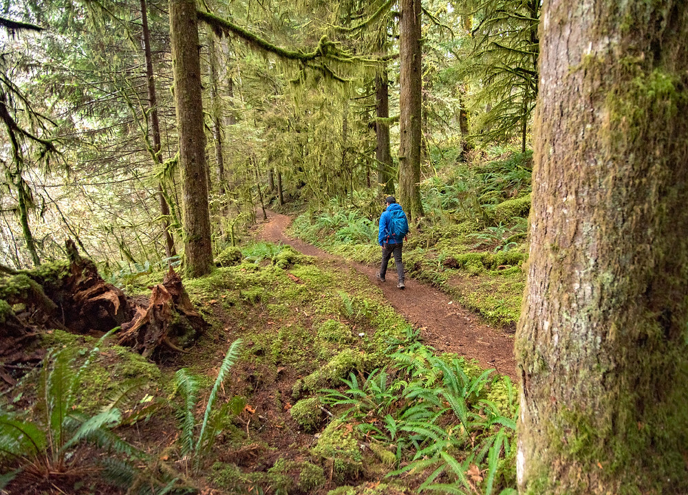 Baker Lake South Trail
