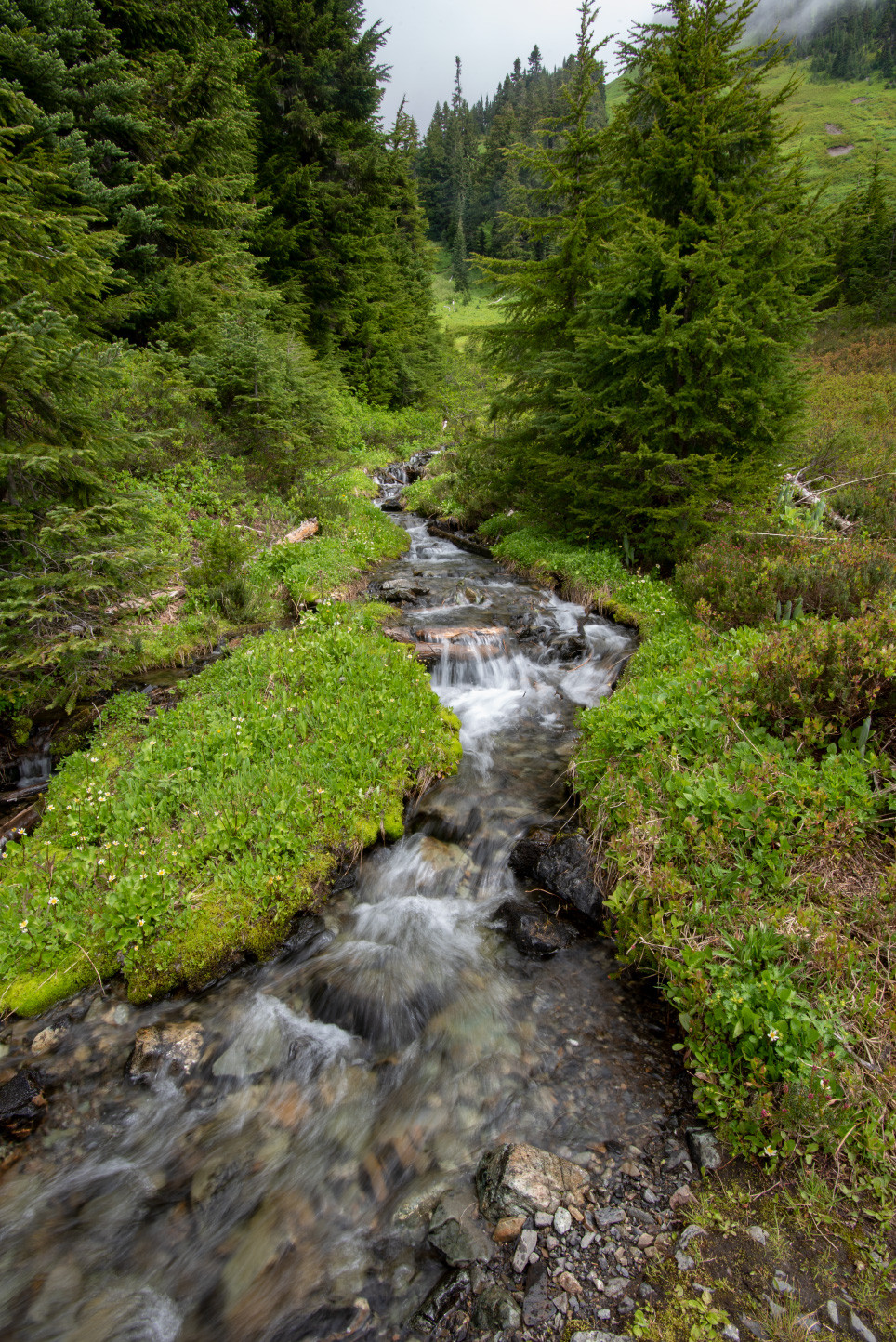 Deerhorn Creek in the Church Mountain meadows