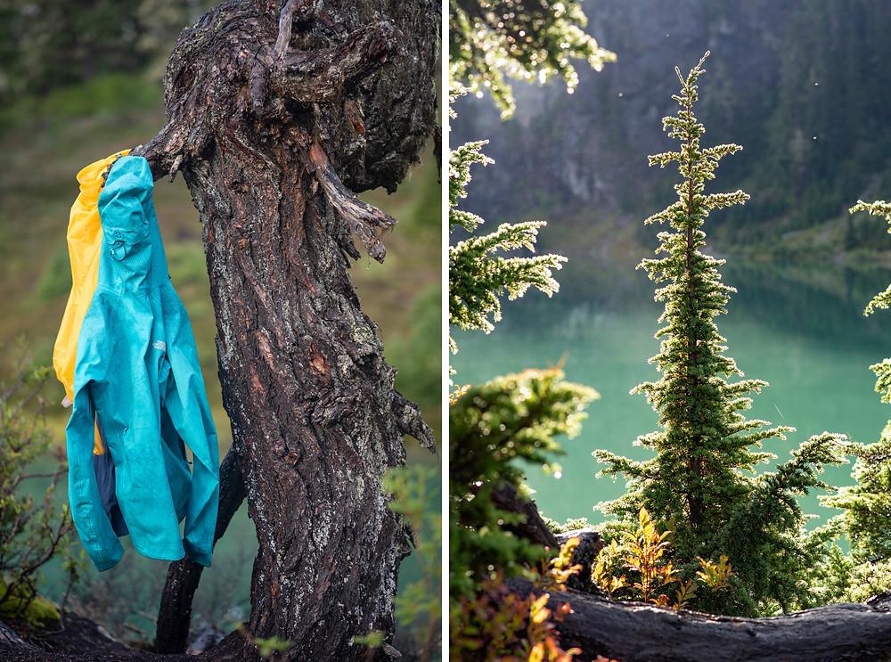 Soaked rain jackets and wet evergreen trees