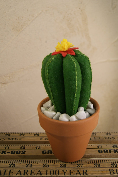 Cactus Cylindre