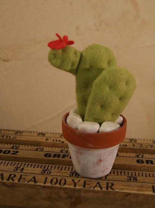 Cactus Raquette Plate