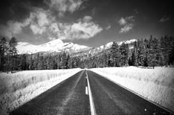 Snowy Landscape in Yellowstone