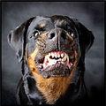 Dog Home Defense