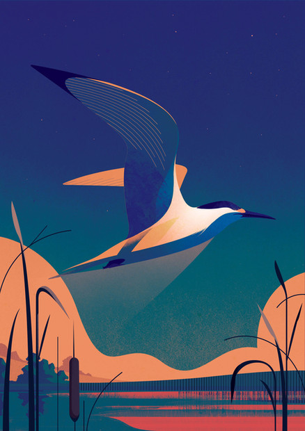 Tern Flying Over the River