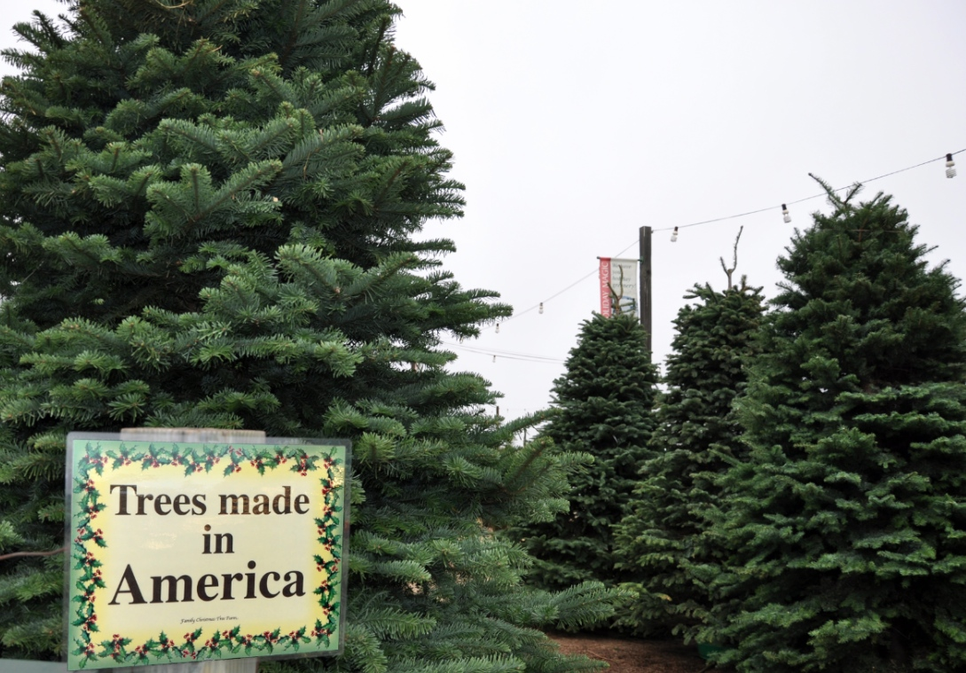 Trees Made In America.jpg