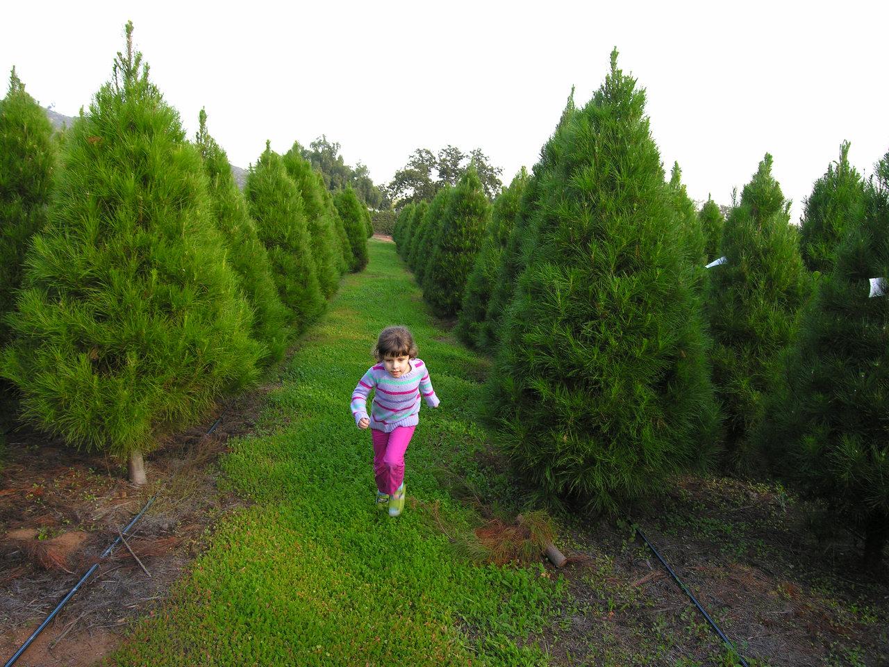 Plantable Christmas Tree.Family Christmas Tree Farm