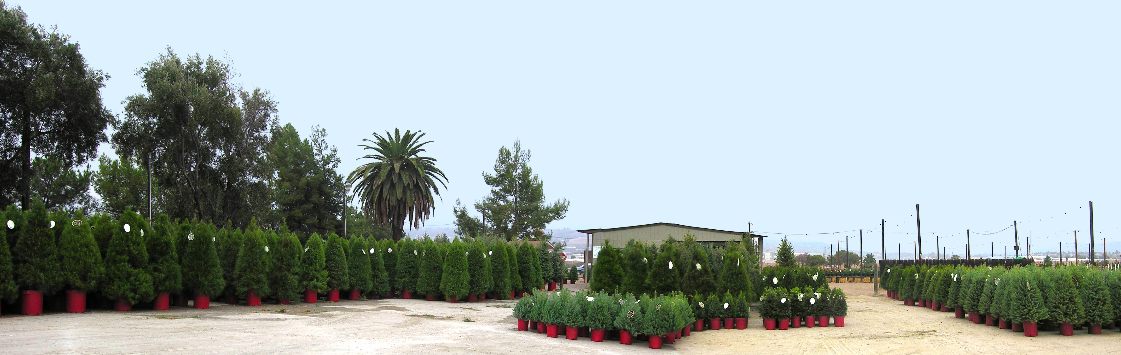 tree panorama.jpg