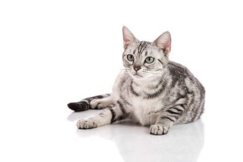 BARF Plan Trächtigkeit Katze
