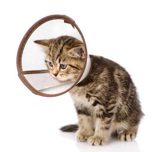 BARF Plan Krankheit Katze
