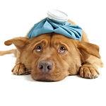 BARF Beratung erkrankte Hunde