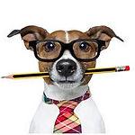 BARF Beratung Hunde