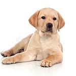 Ernährungsberatung Hunde