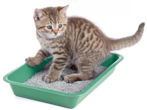 Entgiftung und Darmsanierung Katze