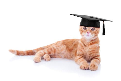 Überprüfung bestehender Futterplan Katzen