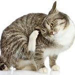 Futtermittelunverträglichkeit_Katze.jpg