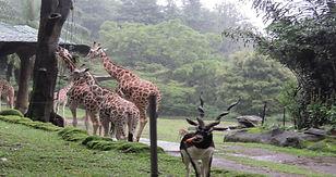 Taman Safari, Puncak