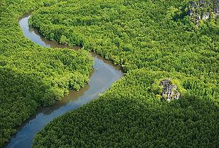 Mangrove Forests, Langkawi