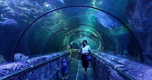 Shark Aquariaum, Jakarta