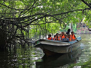 Mangrove Safari