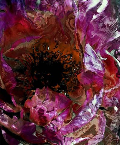 Peony Abstraction