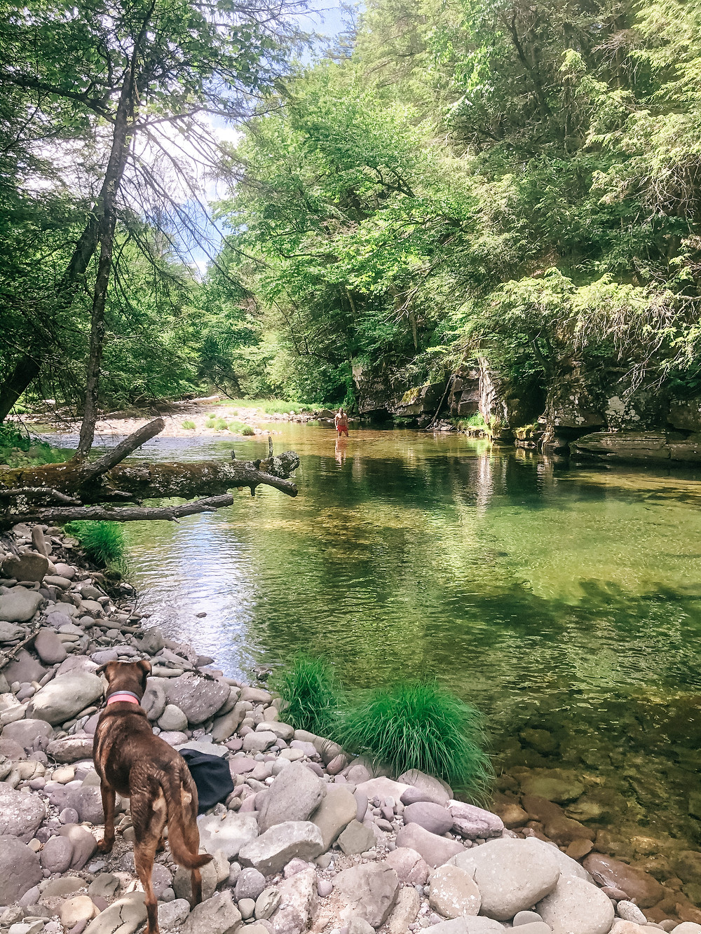 A dog looking out over a natural swimming hole with a man in the distance