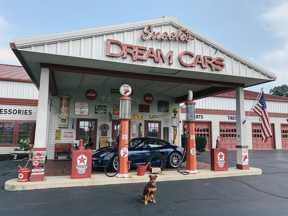 Dog sitting in front of antique car museum