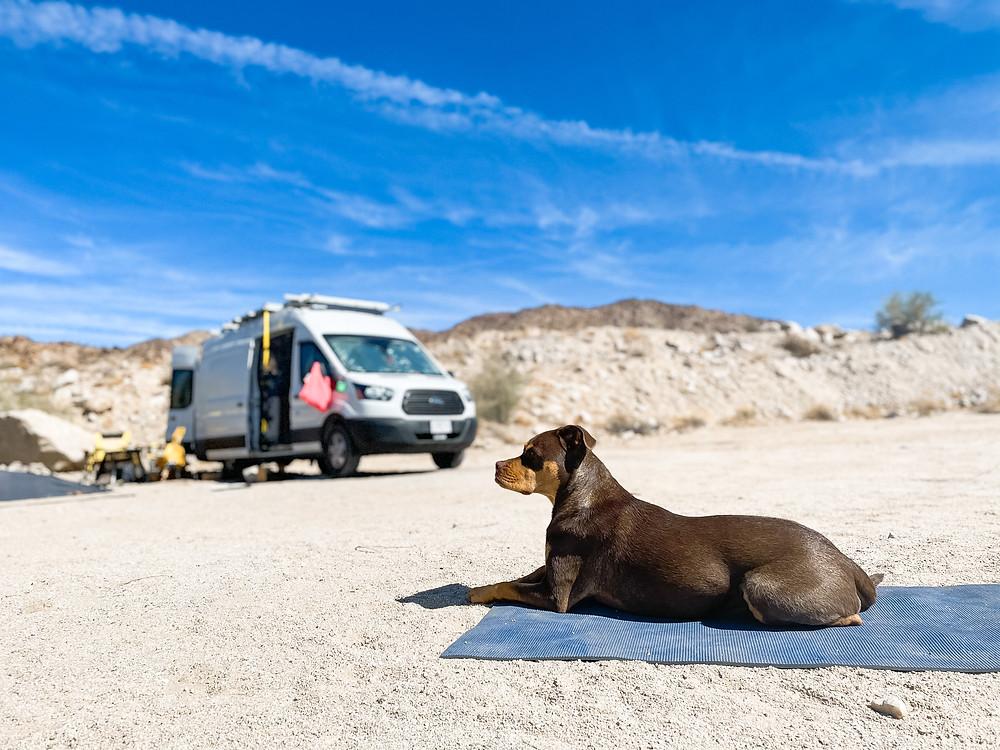 Dog on yoga mat under blue sky with camper van in background