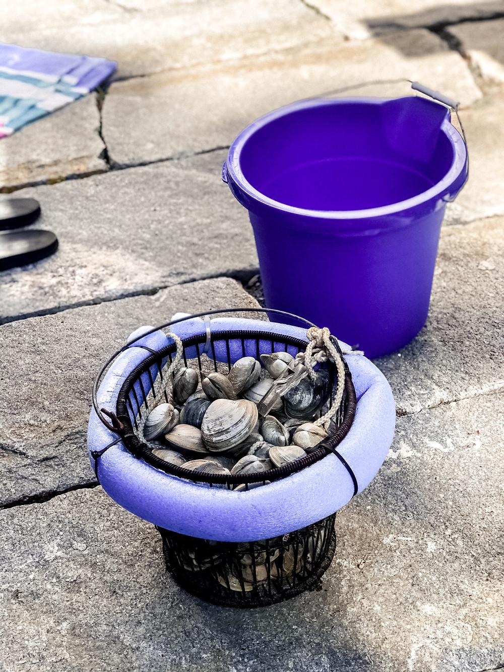 blue bucket full of fresh clams