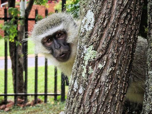 monkey-102922_1920_edited.jpg