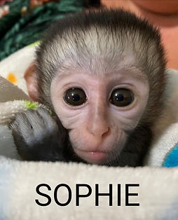 Sophie.jpeg
