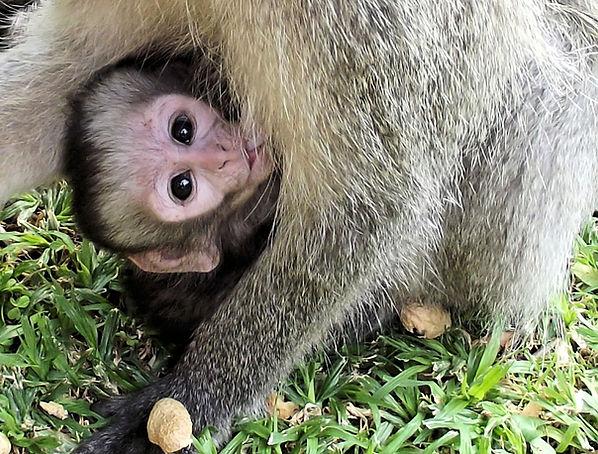 monkey-525176_1920.jpg
