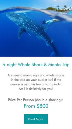 6-night Whale shark & Manta ray Maldives Trip